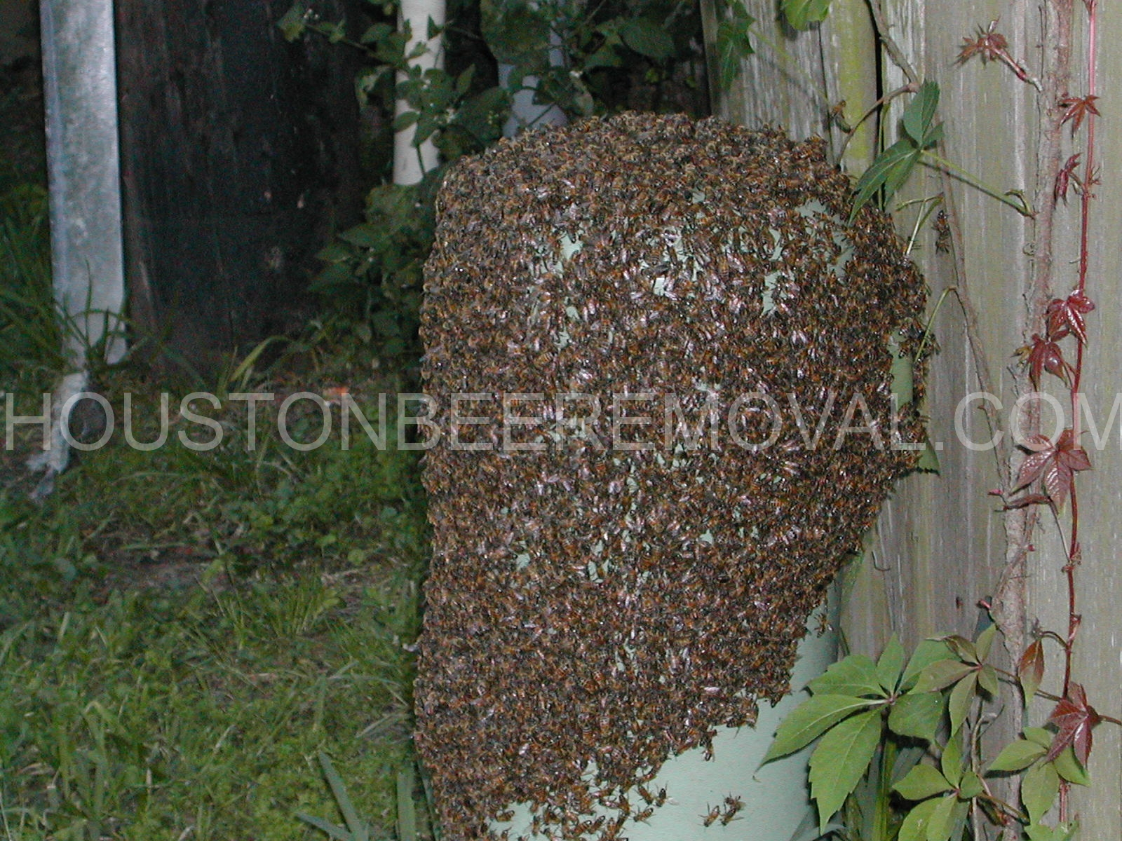 Houston Bee Removal We Salvage These Benificial Insects Provide Them The Ability To Be Productive